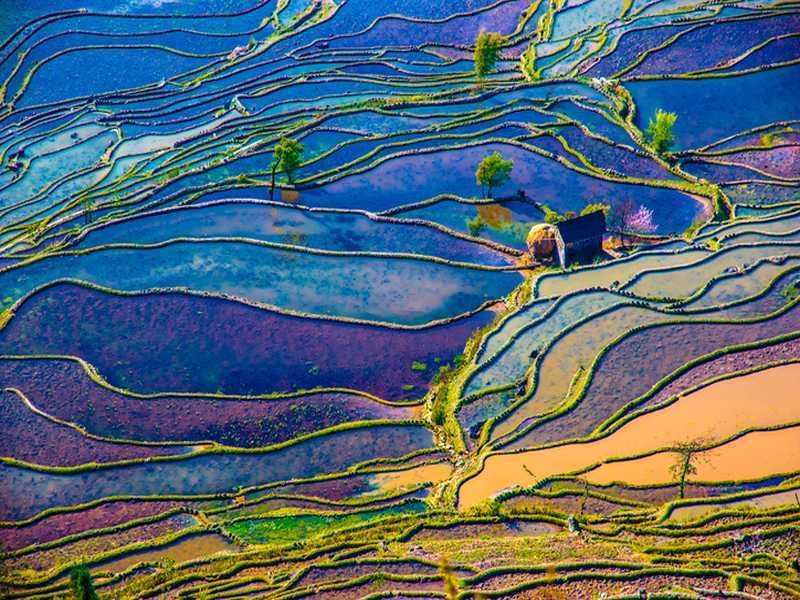 Reisfelder in China